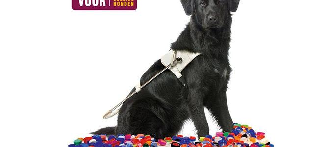 Doneer uw plastic doppen voor blindengeleidehonden